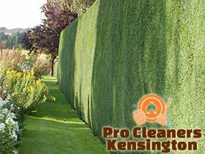 Trimmed Hedge Kensington